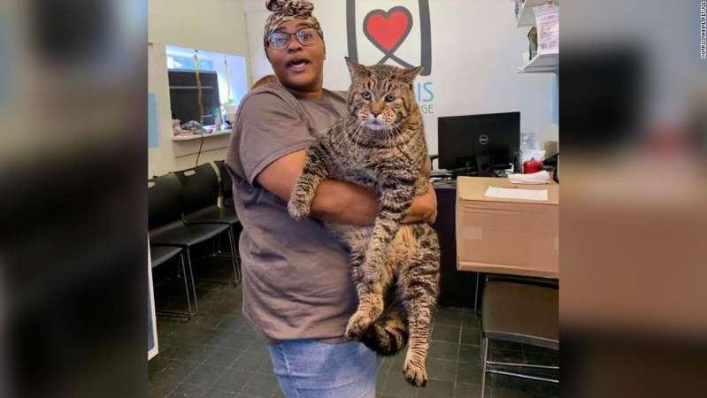 BeeJay the Cat Philadelphia Adoption