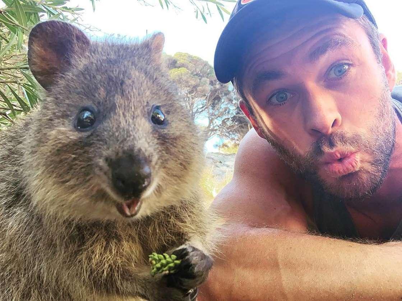 Quokka tourist selfie Australia